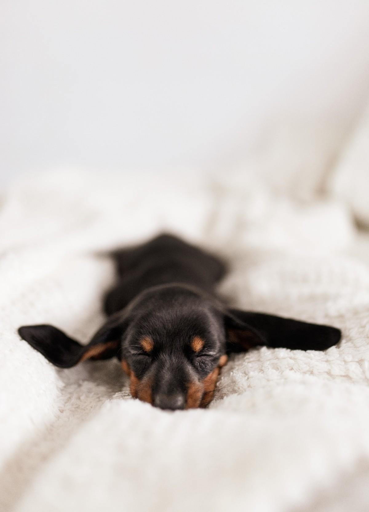개, 놓은, 검은색, 실내이(가) 표시된 사진  자동 생성된 설명
