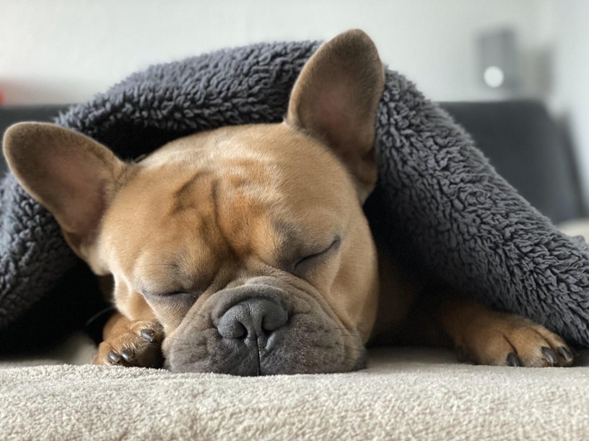 개, 실내, 포유류이(가) 표시된 사진  자동 생성된 설명